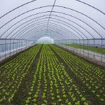 20181108112903918-150x150 carpas para la agricultura. (9)